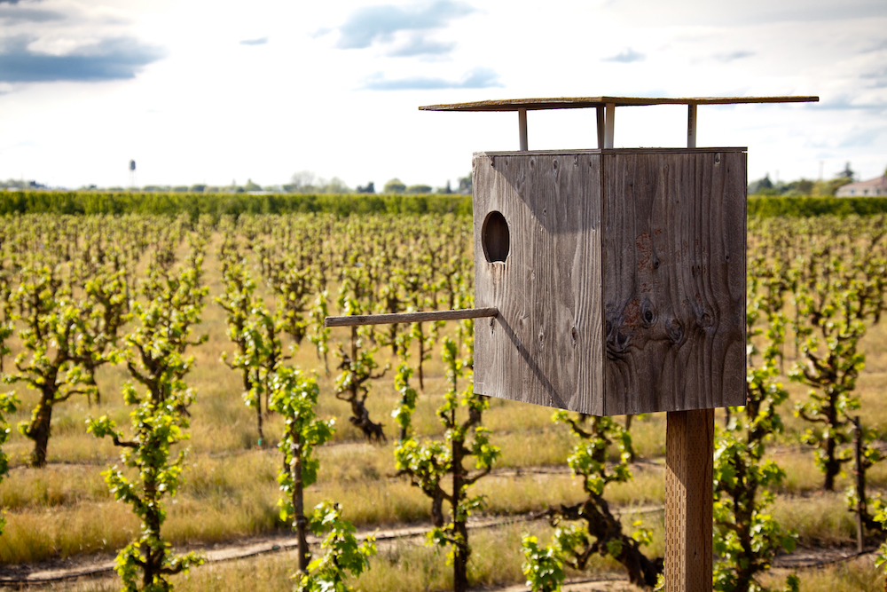 Sustainability at Harney Lane Winery